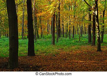 falla samman, skog