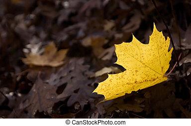 A leaf fallen on the ground.