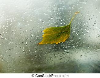 Fallen autumn birch leaf on the windshield of a car (inside shot)
