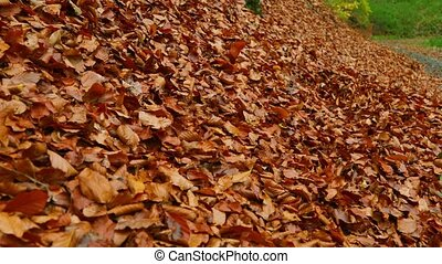 Fallen autumn leaves - Fallen leaves blown by the wind