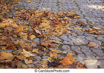 Fallen autumn leaves in park.