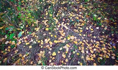 Fallen autumn leaves in the forest