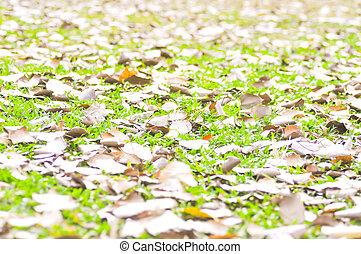 fallen autumn leaves on grass