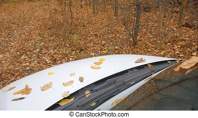 Fallen autumn leaves on hood of a white car in the forest.