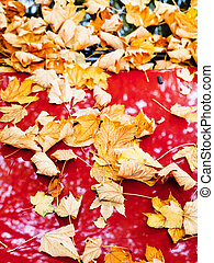 Fallen autumn leaves on red car