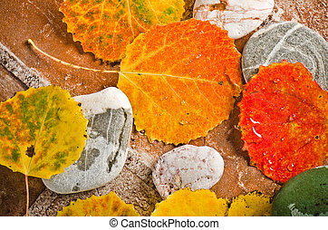 Fallen autumn leaves on stones, close-up