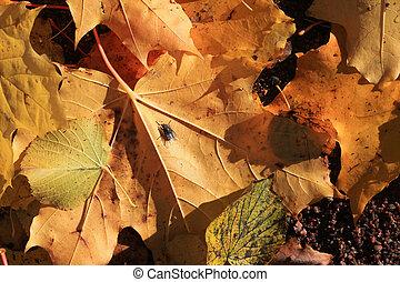 Fallen autumn leaves on the ground
