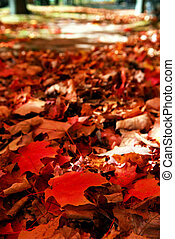 Fallen autumn leaves - Red maple tree leaves on the forest...