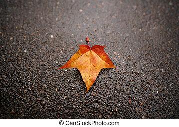 fallen autumn maple leaf on wet asphalt