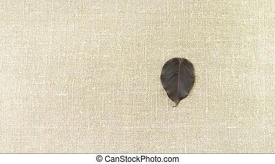 Fallen autumn red-black leaves