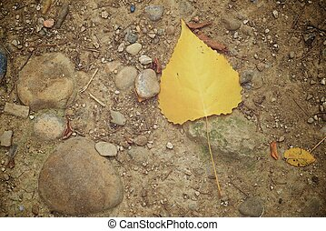 Fallen autumnal leaf