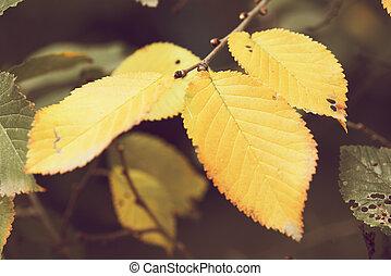 Fallen autumnal leaves