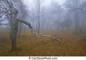 Fallen birch in the wood