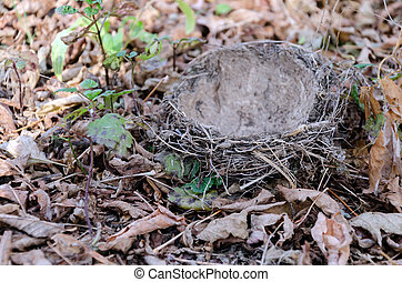 fallen bird nest lies on the ground