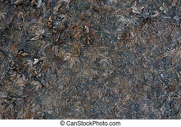 fallen dark leaves with hoarfrost