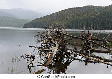 Fallen dead tree in the lake
