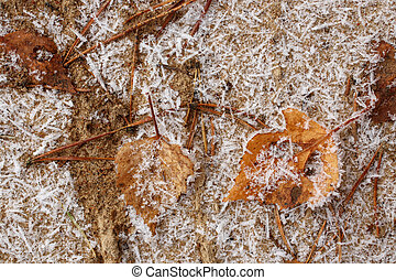 Fallen dry autumn leaves covered with frost on a sand, for backgrounds or textures
