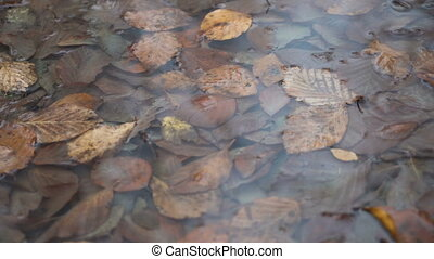 Fallen dry leaves in a puddle of rain water