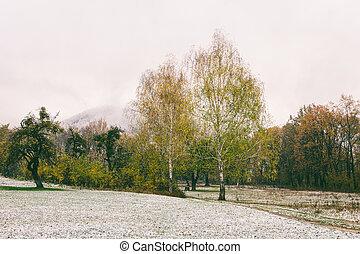 fallen first snow in the autumn park