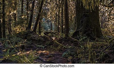 Fallen Forest Tree
