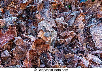 Fallen frosted leaves on the ground.