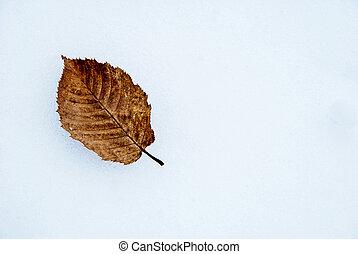 Fallen hornbeam leaf