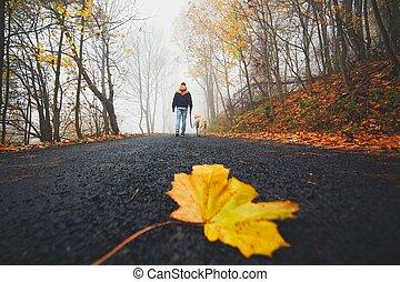 Fallen leaf on the road - Fallen leaf on the rural road road...