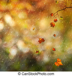 Fallen leaves and rain in the autumn forest, natural backgrounds