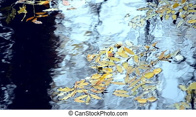 Fallen leaves are on the surface of the water.