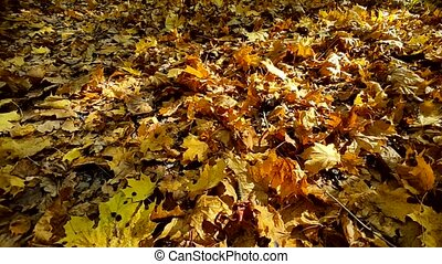 Fallen leaves at the ground