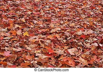 Fallen Leaves - Background of brown, orange and yellow...