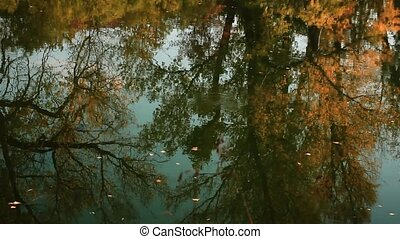 Fallen leaves float on the autumnal river