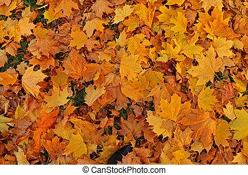 Fallen leaves. Golden autumn