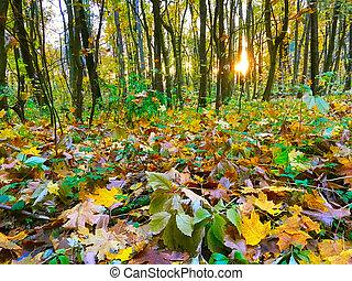 Fallen leaves ground autumn forest