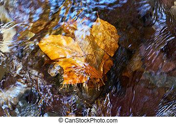 Fallen leaves in a river