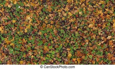 Fallen leaves in autumn forest. Colorful pattern background....