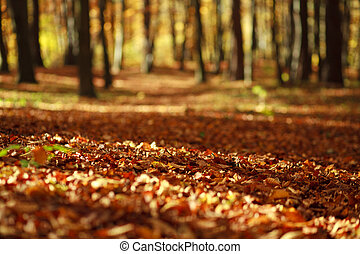 Fallen leaves in autumn forest in the rays of the evening sun