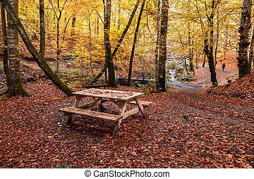 Fallen Leaves in Autumn Season