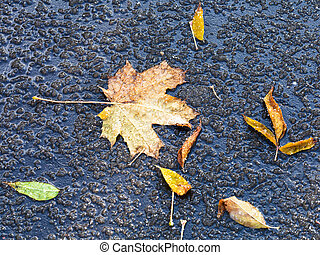 fallen leaves in melting first snow in autumn