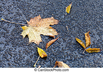 fallen leaves in puddle from melting first snow