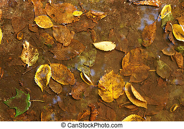 Fallen leaves in water as a background