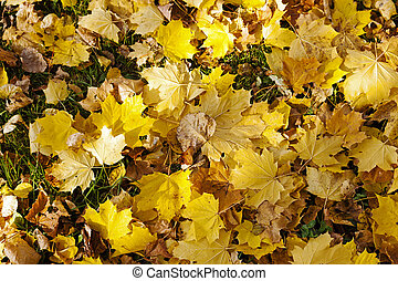 fallen leaves of trees close-up