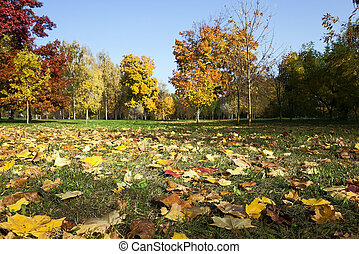 fallen leaves of trees in the park