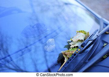 fallen leaves on a car window