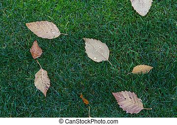 Fallen leaves on a lawn