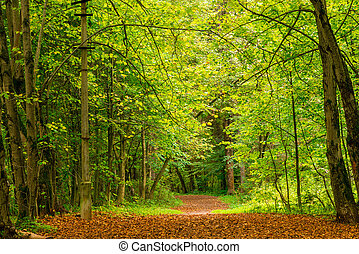 Fallen leaves on a path in the autumn forest, landscape in September