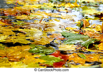leaves on the cool blue water