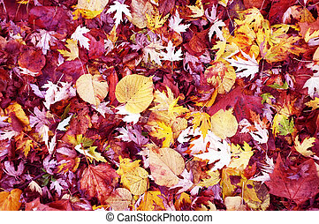 Fallen leaves on the floor