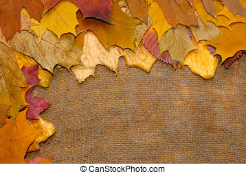 Fallen leaves over canvas background
