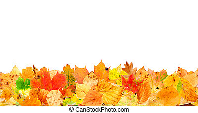 Fallen Leaves - Multi colored autumn leaves on the ground